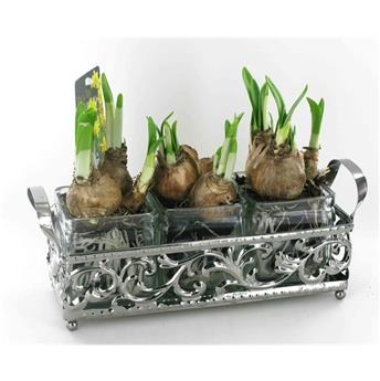 NARCISSUS cyc N0005 P X6 JARDINIERE ARGENT