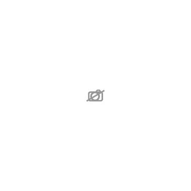 HYDRANGEA macrophylla D13 x6 4+ TETES Hortensia